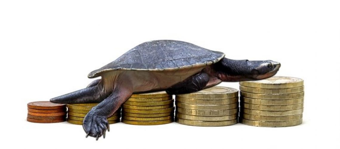 turtles on coin isolated white background